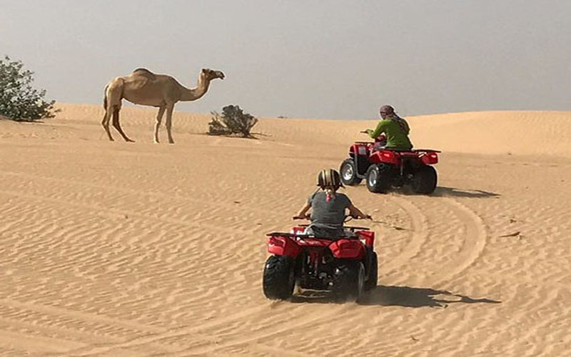 Sahara Relax: Quad bike, Buggy, Camel and activities