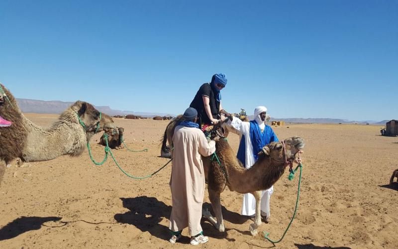 Zagora excursion and camel for the tour around Tinfou sand dunes